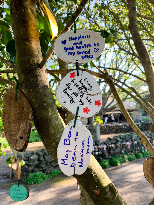2018-10-21 wishing tree 2